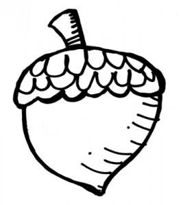 acorn-drawing-2